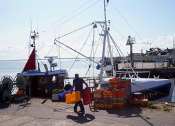harbour life8