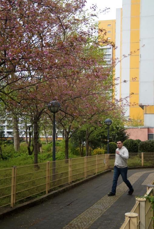 springtime walk...