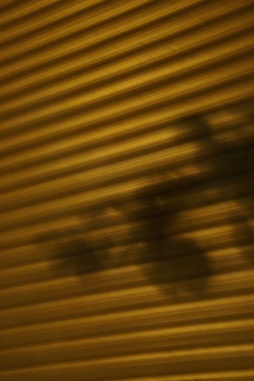 diesen schattenflecken in der nacht
