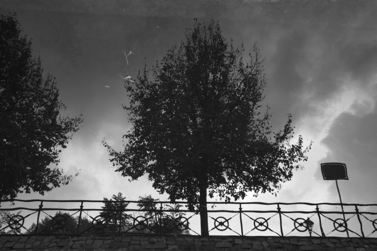 kanalbaum