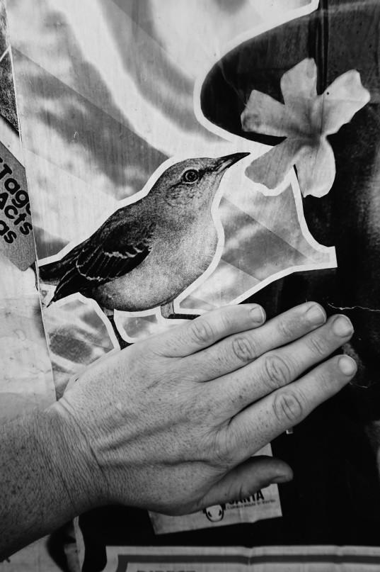 der vogel und ich9