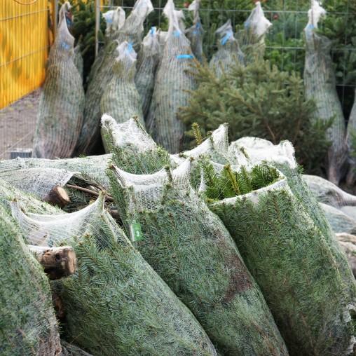 weihnachtsbaum8