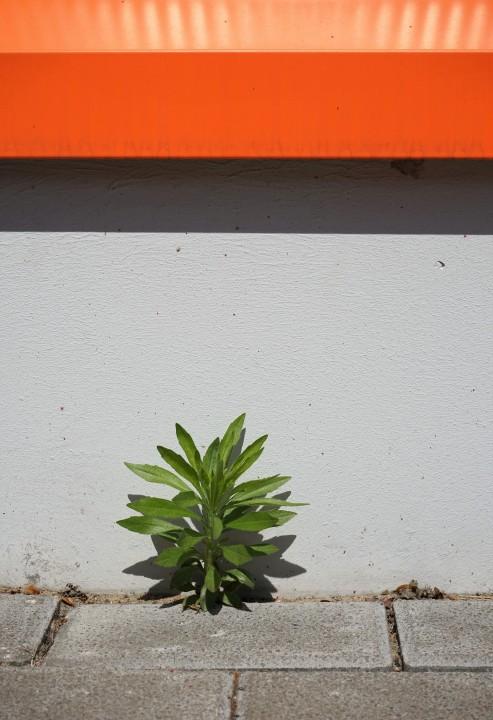 pflanzen1
